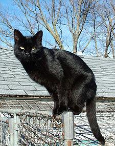 225px-Blackcat-Lilith