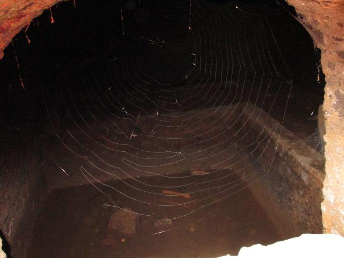 Stanito through spider net cerveteri