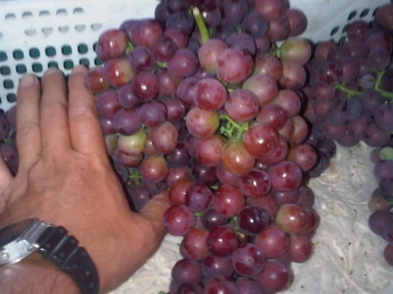 Chañaral Alto grapes