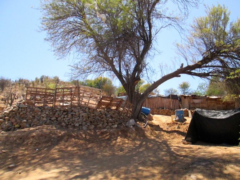 Chañaral Alto little farm Stanito