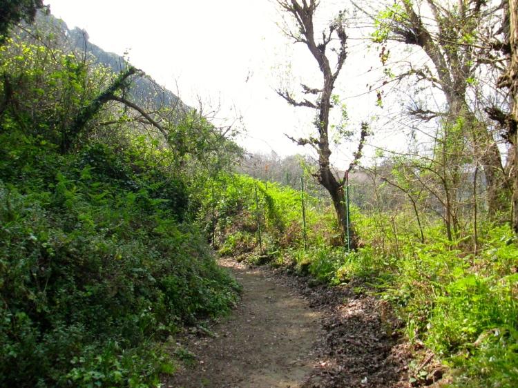 Sybille path 1