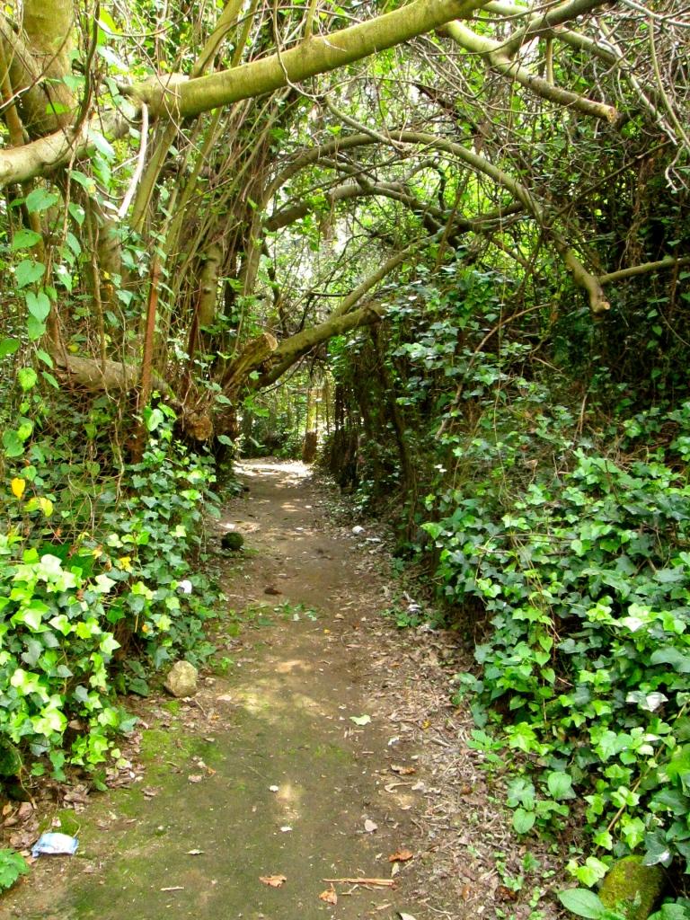 Sybille path 3