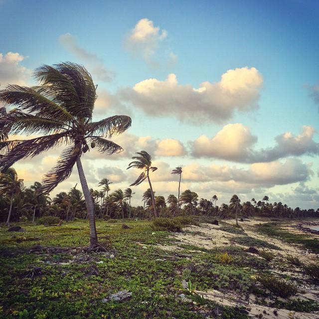 Mayan Coast
