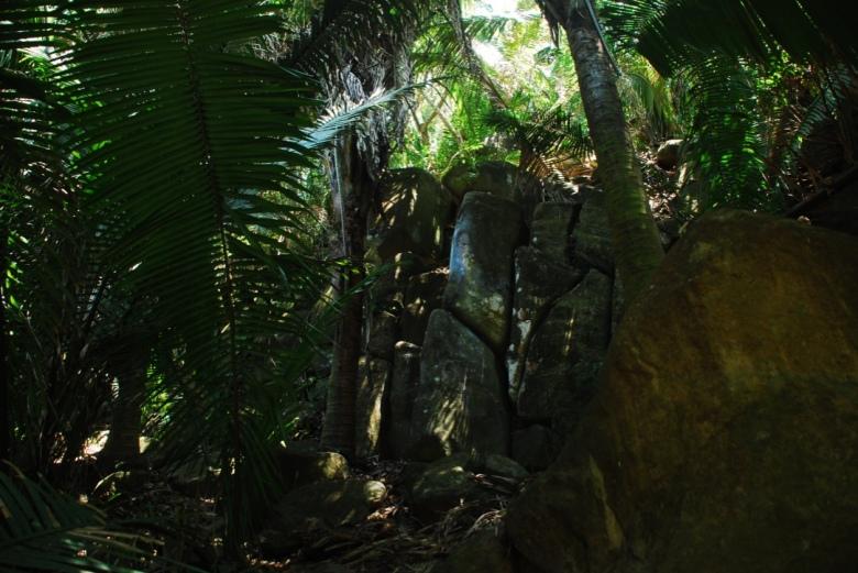 Through the jungle Stanito