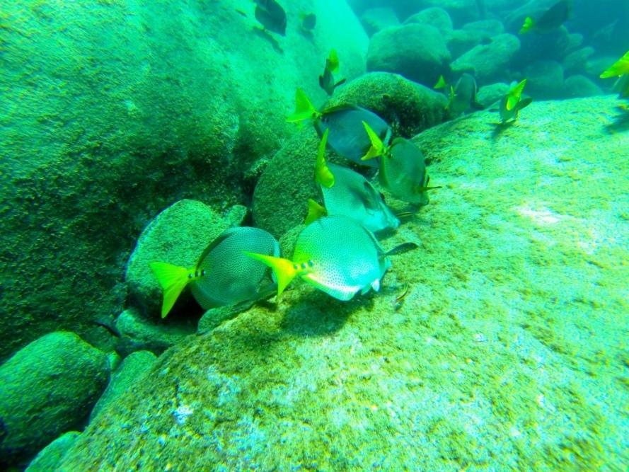 Cabo_Pulmo_Baja_California_Stanito_fish