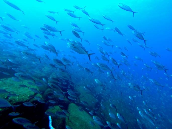 Cabo_Pulmo_Baja_California_Stanito_fish2