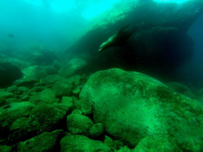 Cabo_Pulmo_Baja_California_Stanito_seal