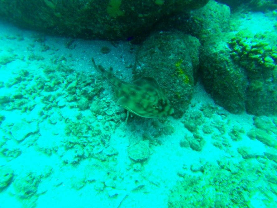 Cabo_Pulmo_Baja_California_Stanito_stingray