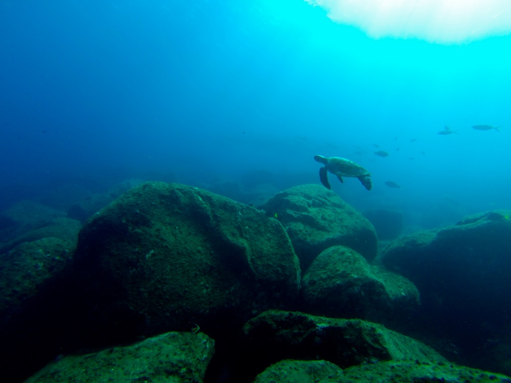 Diving in Baja California
