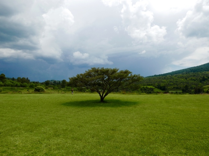 lonely_big_tree_mexico_stanito