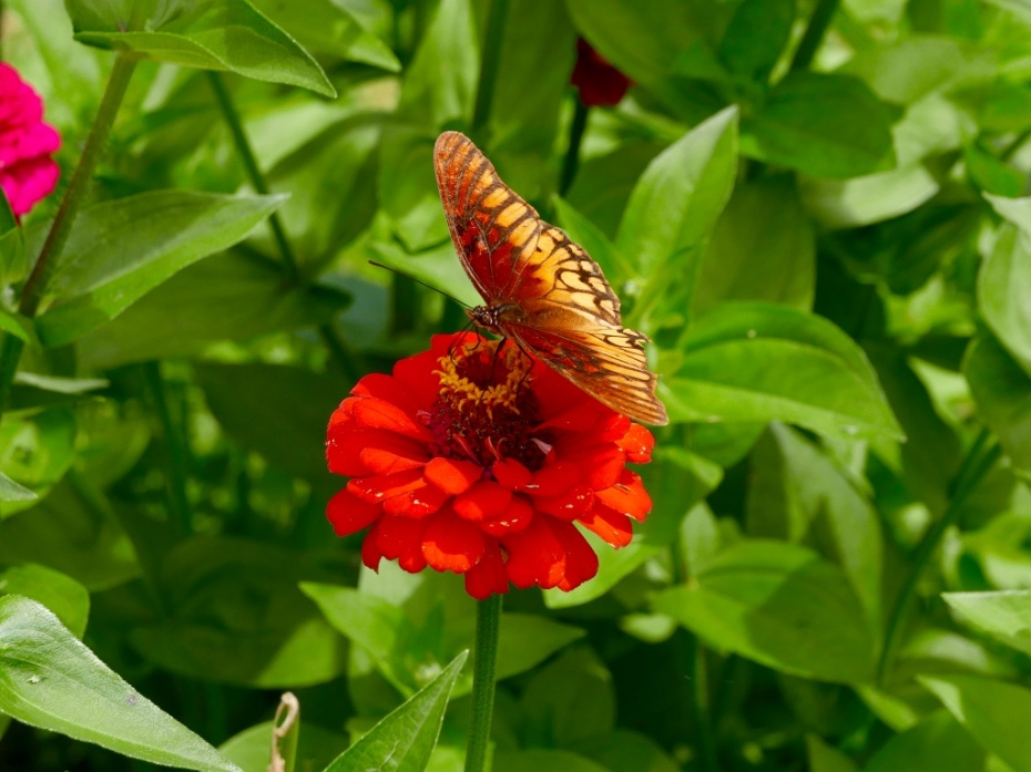 Patzcuaro_butterfly_macro_close_up_stanito_mexico