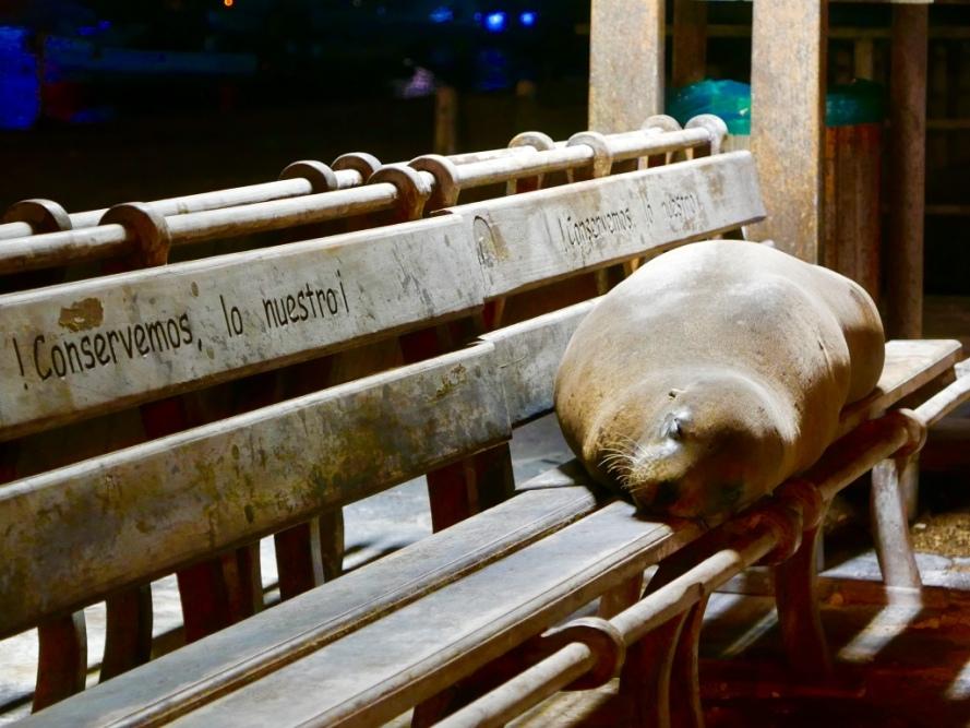 Sealion_Galapagos_Ecuador_Wildlife_Protection_Environment_biodiversity_Stanito
