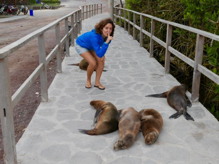 Stanito_Galapagos_sealions_everywhere