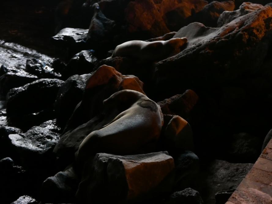 Stanito_Galapagos_sealions_everywhere_1