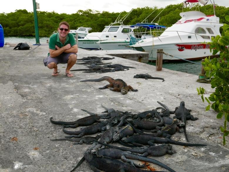 travelbuddy_iguanas_galapagos_stanito