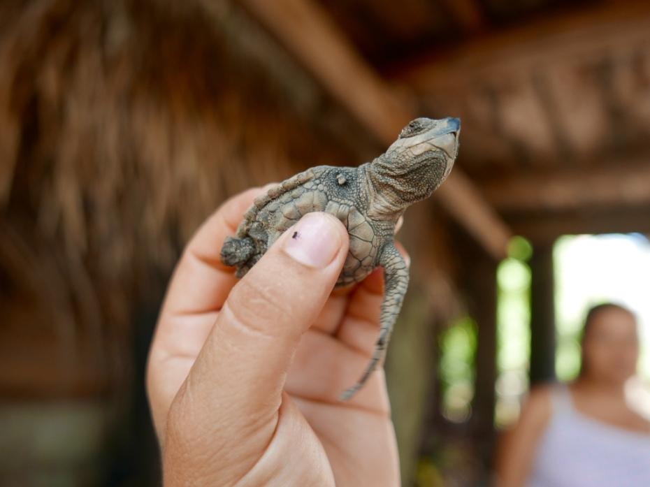 Deformed_Turtle_Center_San_blas_Mexico_Stanito_1