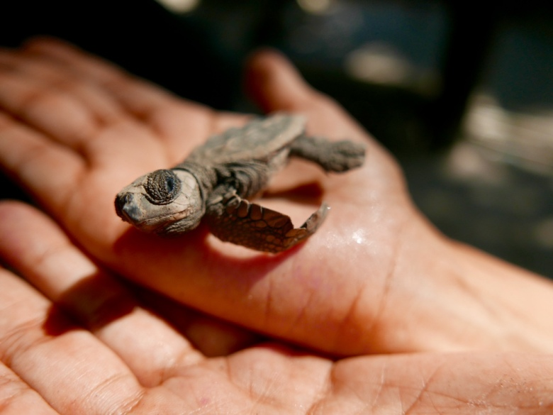 Deformed_Turtle_Center_San_blas_Mexico_Stanito_2