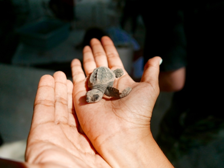 Deformed_Turtle_Center_San_blas_Mexico_Stanito_3