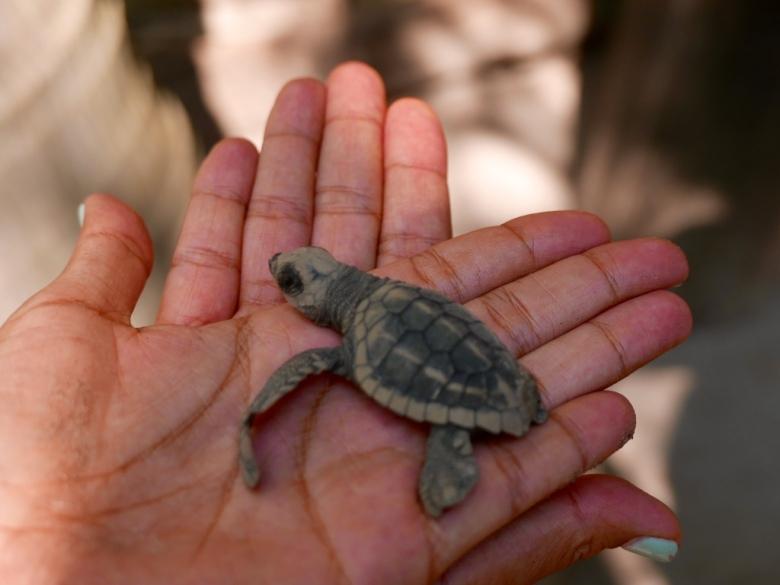 Deformed_Turtle_Center_San_blas_Mexico_Stanito_4