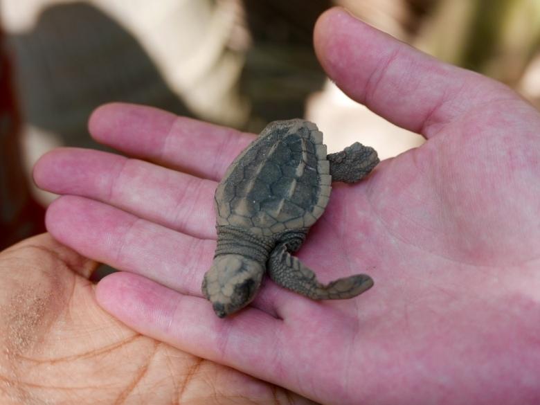 Deformed_Turtle_Center_San_blas_Mexico_Stanito_5