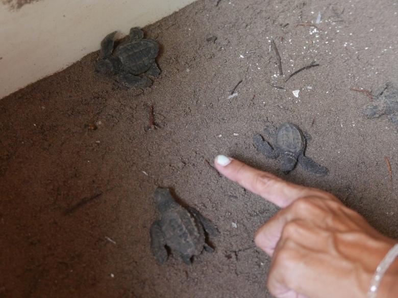 Turtle_Center_San_blas_Mexico_Stanito_2