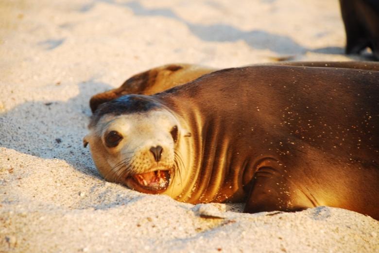 sea_lion_beach_galapagos_stanito_1024