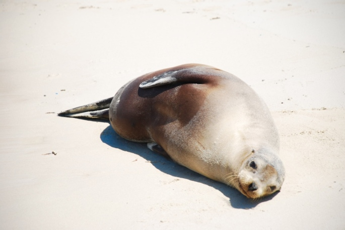 sea_lion_sunbathing_galapagos_stanito_1024