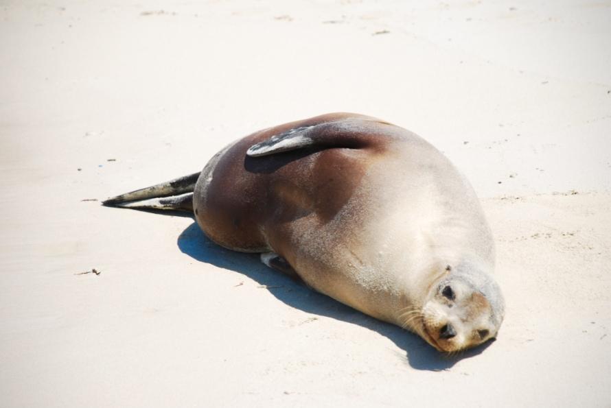 sea_lion_sunbathing_galapagos_stanito_1024