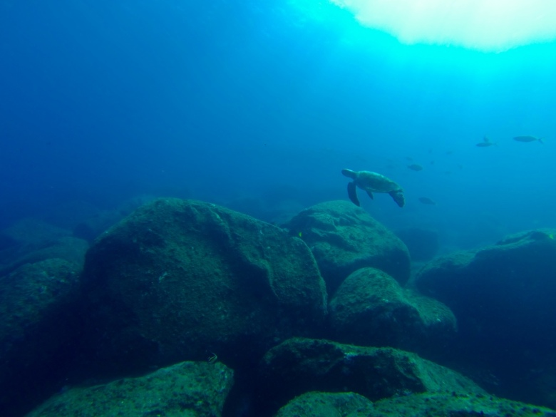 underwater_turtle_galapagos_stanito_1024