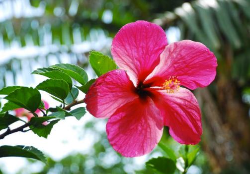 flower_ometepe_island_nicaragua_stanito